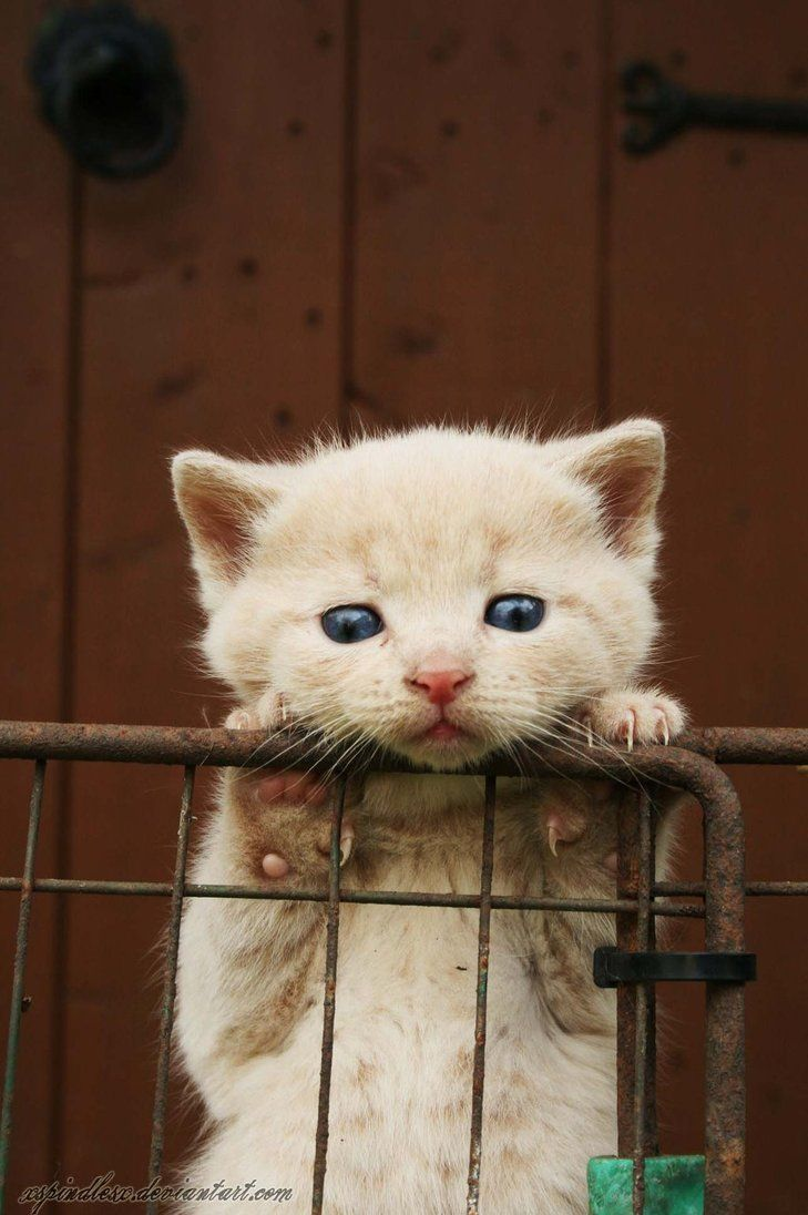 Please can I come out and play? akl* | Just KITTENS | Cats ...