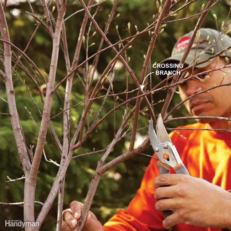 Bush pruning tips for healthier bushes how to trim
