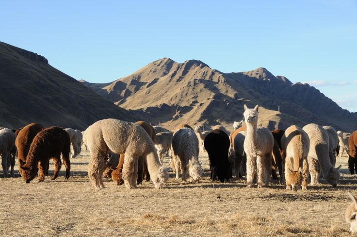 Amano yarns. Inspiration in the Andes. Natural colors of Alpacas. Puyu yarn. Pattern book Vol. 1. Made in Peru.