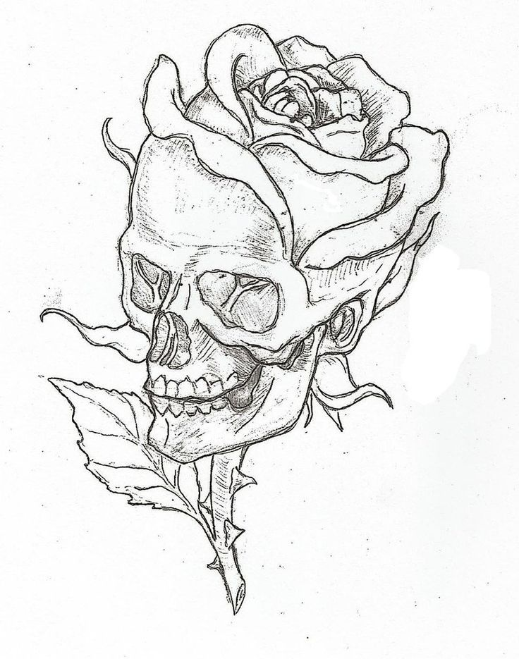 25 Best Ideas About Skull And Rose Drawing On Pinterest