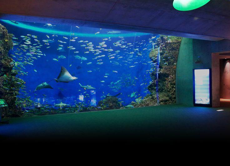 大人のナイトステイ 園内体験プログラム 水族館展示 | 鴨川シーワールド-東京・千葉の水族館テーマパーク