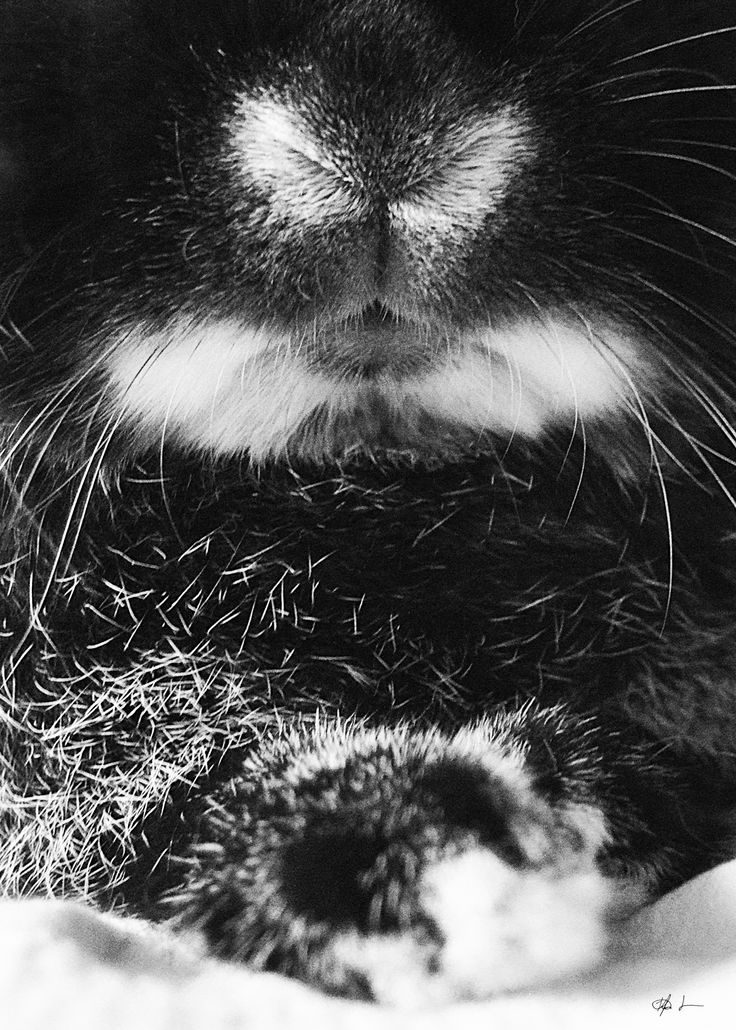 Photography - Black and white bunny - By Kia Lange