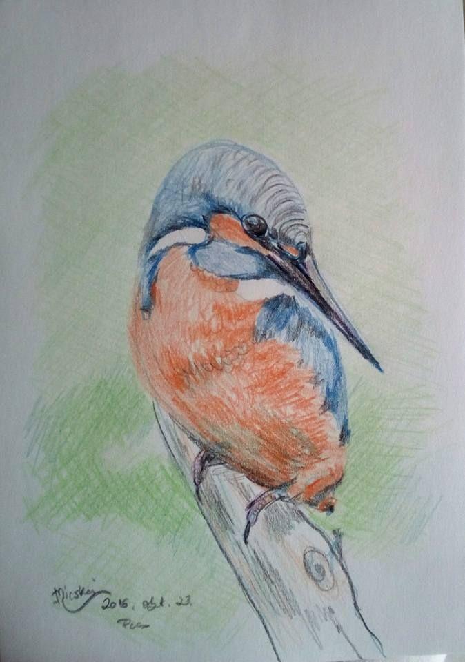 Jégmadár- madár4-I- -színes ceruza rajz- -24x17 cm