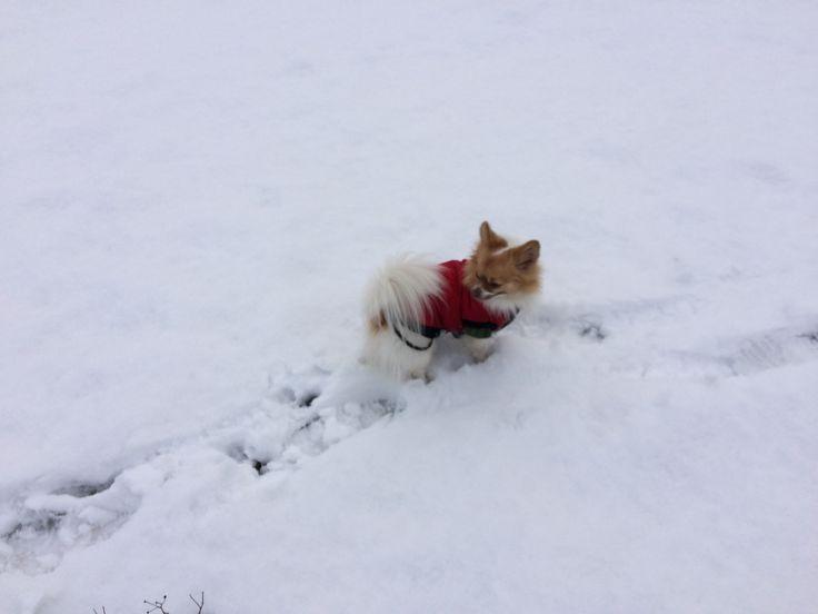 12 febr 2017 Pukkie in de sneeuw