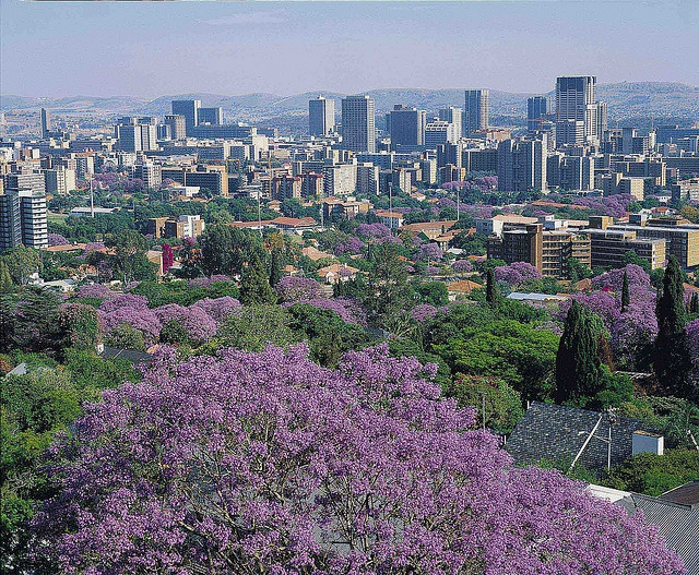 Jacaranda City - Pretoria : South Africa