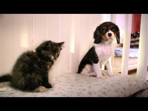 Agria Djurförsäkring: Reklamfilm kattunge och valp 2013. Så himla söt!