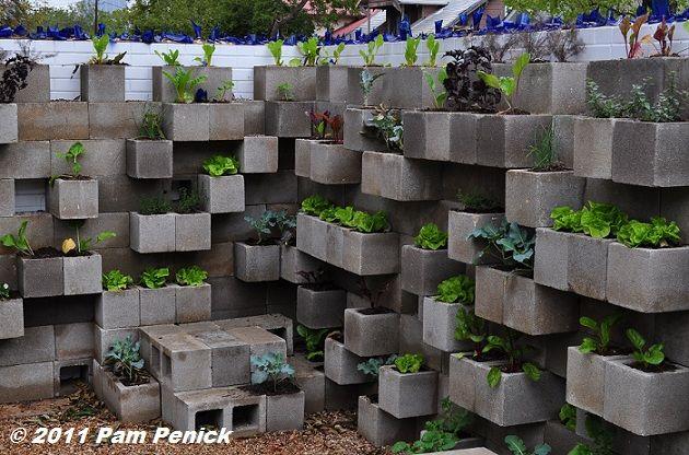 Digging » Edible wall! Cinderblock wall vegetable garden wows at Big Red Sun