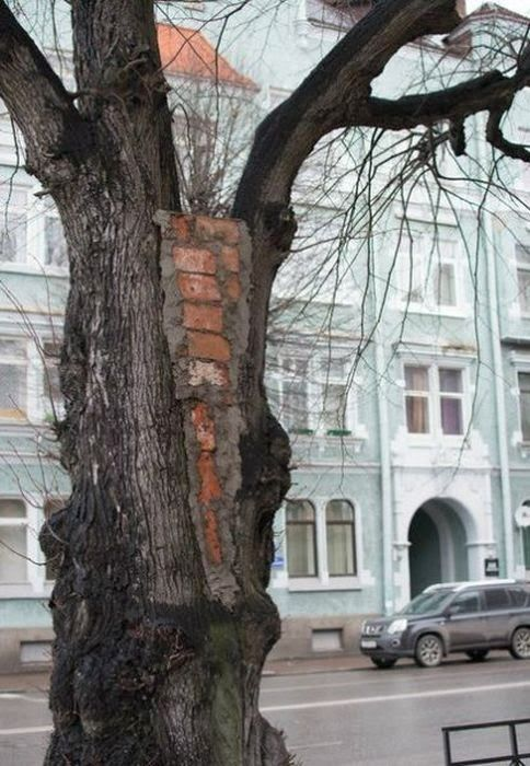 Russia WTF 2014