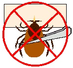 How to extract a tick (in Russian)
