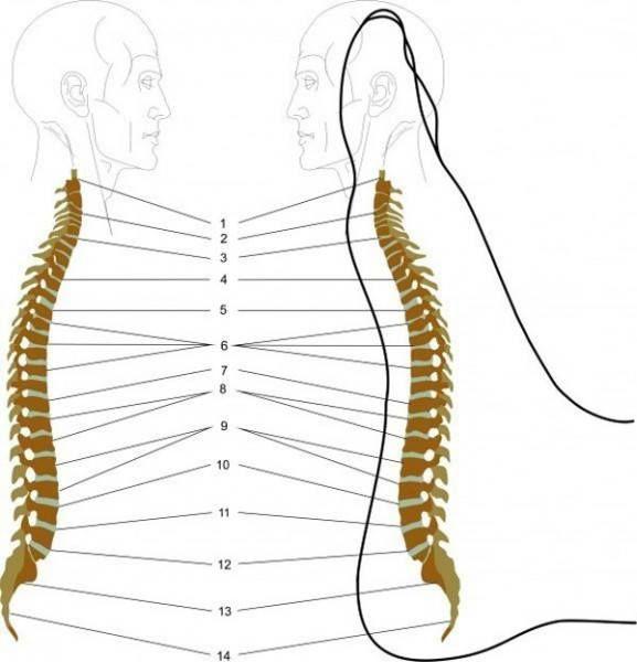 kręgosłup i stopa, punkty wspólne