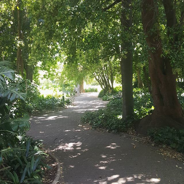 The Company's Garden, one of my favourite spots. Packed a picnic, strolled through the gardens and then found a shady  spot under one of the many massive trees. #freethingstodo