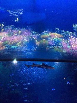 絶対見たい!新江ノ島水族館のナイトアクアリウムが綺麗すぎ! - NAVER まとめ