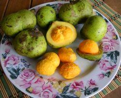PEQUI, PIQUI - Não é uma fruta exatamente, o piqui se frutifica em árvores. Tendo 3 partes: o fruto, a polpa e o caroço. A polpa é consumida com arroz, feijão, galinha ou batida com leite e açúcar. Fruto cheiroso que fornece os típicos encontram-se licor, galinhada com pequi e arroz de pequi. -----@----- It's not exactly a fruit, the piqui of fruits trees. Having 3 parts: the fruit, the pulp and core. The pulp is eaten with rice, beans, chicken or hit with milk and sugar.