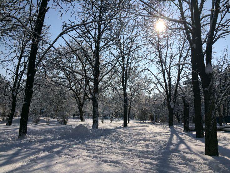 Winter 2016 Parcul Tineretului Bucharest Romania