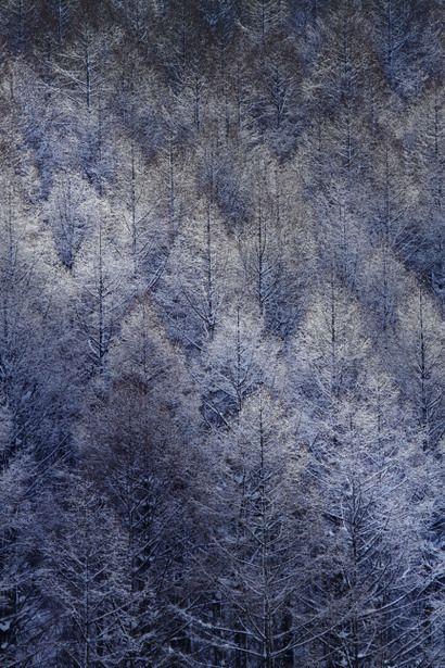 The color of winter, Biei, Hokkaido, Japan