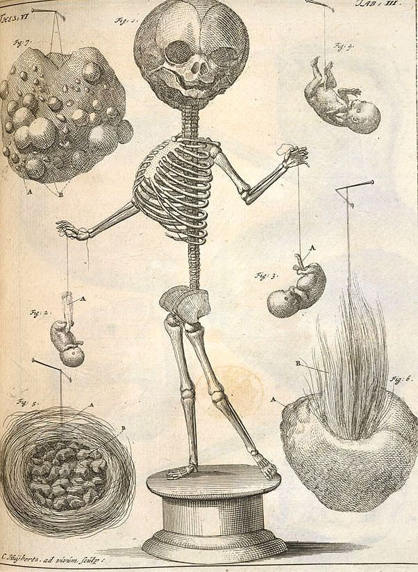"A depiction of one of Ruysch's skeletons, here holding two foetal ""puppets"" – Source (NB: this digital copy is not openly licensed, © The British Library Board)"