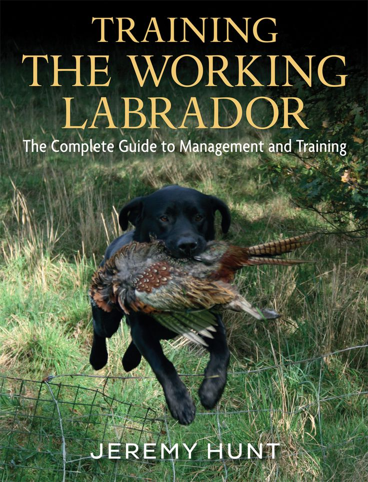Training the Working Labrador by Jeremy Hunt | Country Books Direct. Training the Working Labrador looks at all aspects of the care, management and training of a modern working Labrador, covering many of the issues affecting today's dog owners. The book provides advice and guidance on a host of practical feeding, management and training matters. Essential reading for the first time owner, but equally important as an update for the experienced.