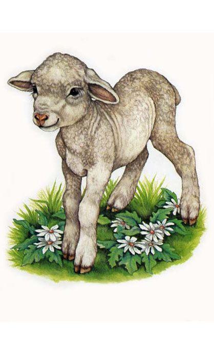 agneau | Peintures animalières, Animaux et Animaux de la ferme