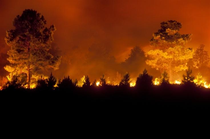A wild fire blazes Friday night in Texarkana, Texas, on Friday, Aug. 5.