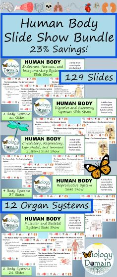 Slideshows in PowerPoint format for all of the major body systems. Everything you need to learn about the human body for biology or health class!