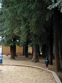 you have to love those trees at Redwood Day School in Oakland CA