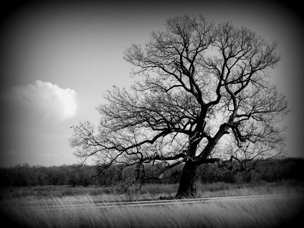 love black and white trees