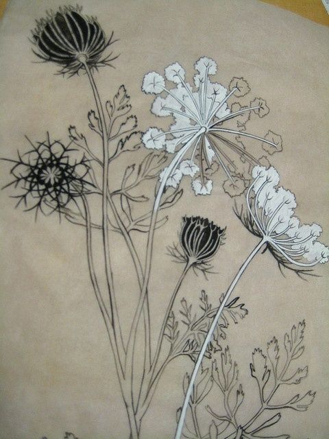 queen anne's lace- I love that this is on tracing paper or vellum because it is translucent. The contrast of light passing through the paper and the opaque white and black ink stopping it almost make it glow. I'm guessing this is ink and a gouache. I also