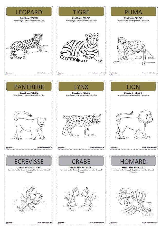 Un jeu de 7 familles pour lequel vous pourrez choisir parmi 20 familles différentes d'animaux, en fonction des notions abordées (lieux de vie, alimentation, corps, reproduction, famille scientifique ...)