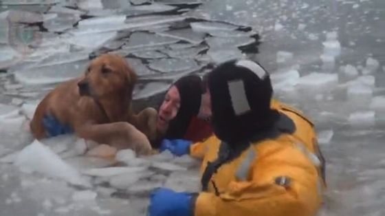 Firefighters save Golden Retriever submerged in icy river (VIDEO) Thank God for the firefighters that saved this Goldie!
