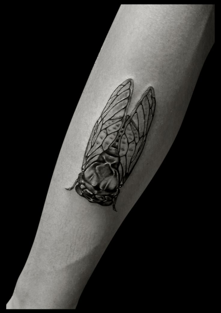 122 best images about beautiful turtle cicada tattoos on pinterest. Black Bedroom Furniture Sets. Home Design Ideas