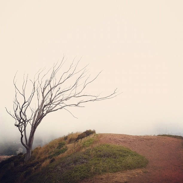 "@lec101's photo: ""cloud lift & #thatsftree"""