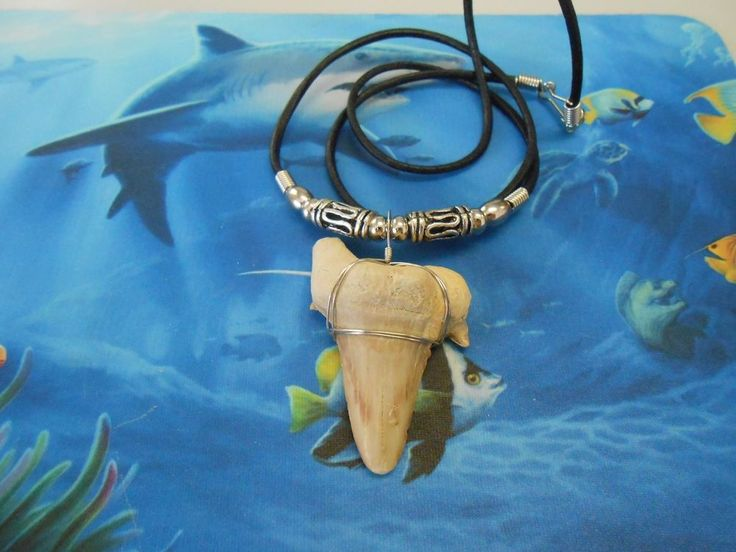 "This fossil shark tooth measures 2"" on the long side slant and is double wrapped with stainless steel wire. It is on a 24"" black leather cord with lanyard clasp & accented with snake style metal beads. 