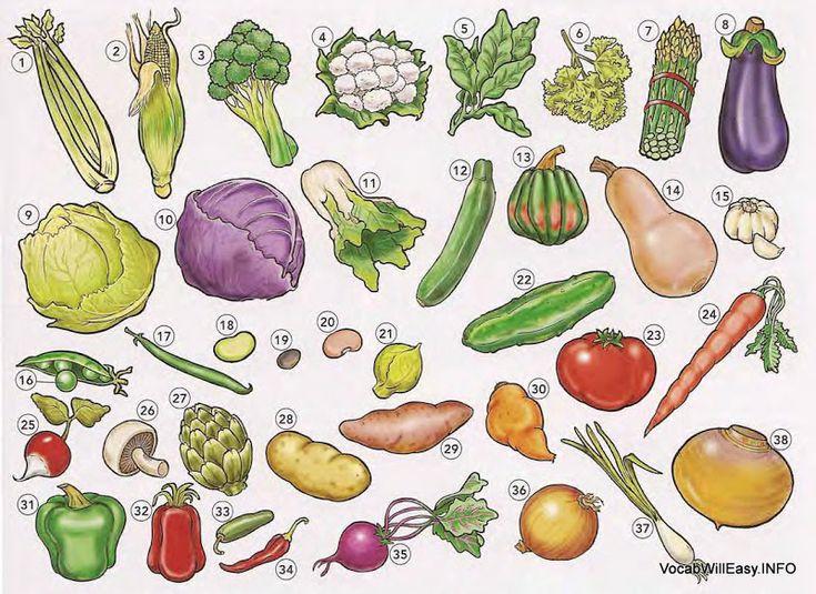 1 celery 2 corn 3 broccoli 4 cauliflower 5 spinach 6 parsley 7 asparagus 3 eggplant 9 lettuce 10 cabbage 11 bok choy 12 zucchini 13 acorn squash 14 butternut squash 15 garlic 16 pea 17 string bean/green bean 18 lima bean 19 black bean 20 kidney bean 21 brussels sprout 22 cucumber 23 tomato 24 carrot 25 radish 26 mushroom 27 artichoke 28 potato 29 sweet potato 30 yam 31 green pepper/ sweet pepper 32 red pepper 33 jalapeno (pepper) 34 chili pepper 35 beet 36 onion 37 scallion/green onion 38…