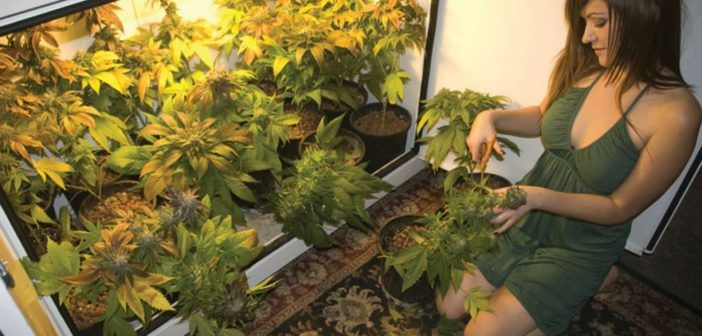 Grow Weed Indoors – All of the Equipment You Need to Grow the Best Indoor Weed!