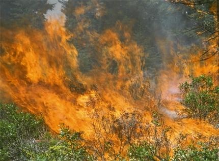Wildfire and an Example of Its Important Link to the Ecosystem