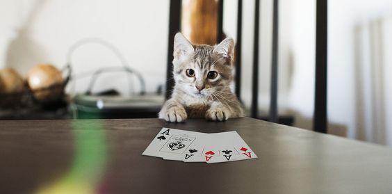 Казино игры с кошками какое интернет казино лучшее