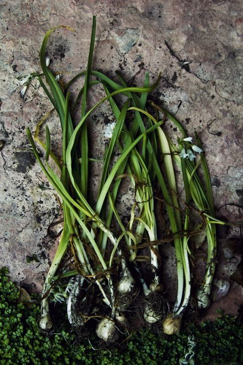 Yes, yes, yes!! :) Wild Onion & Stinging Nettle Soup, probably one of the first recipes I want to make with my gatherings this year