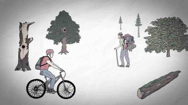 Animationsfilm Waldnaturschutz - #BaySF #Staatsforsten #Waldnaturschutz #Naturschutz #Natur #Holz #Totholz #Schwarzstorch #Wildkatze