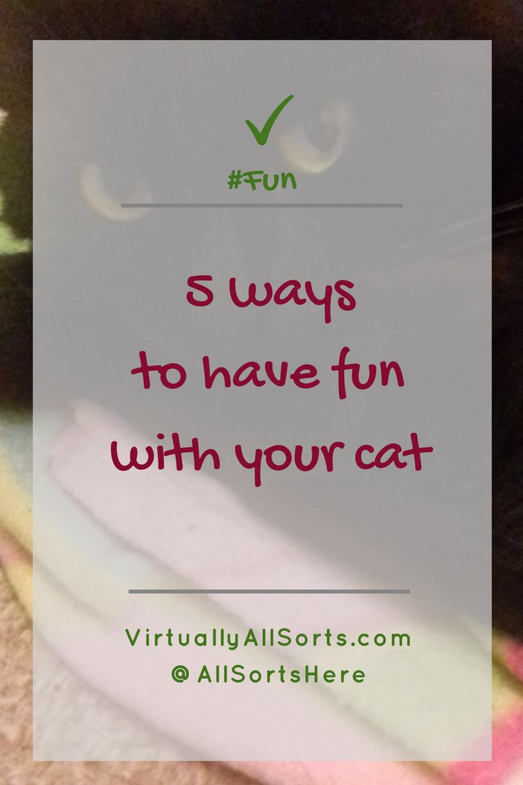 Here are 5 purrfect ways to have fun with your cat!