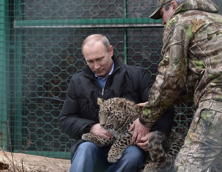 How awesome is this leopard. | 48 Photos Of Vladimir Putin Looking At Things