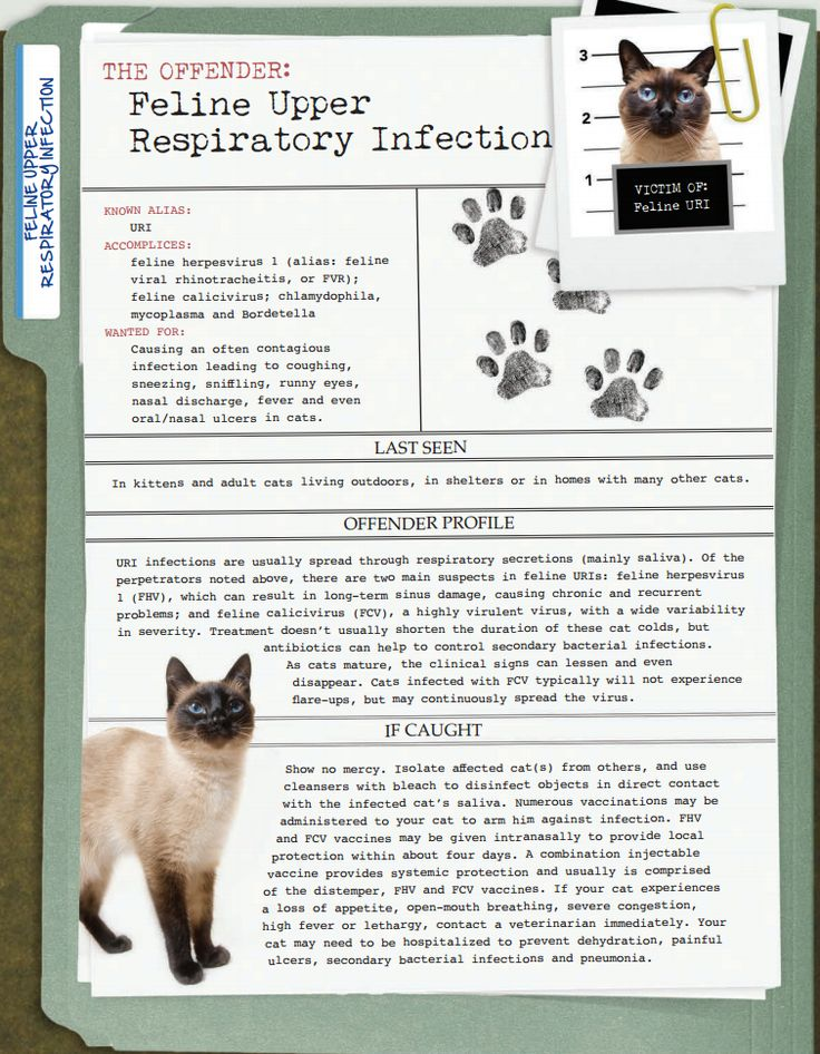 America's Most Unwanted Pet Health Conditions: Feline Upper Respiratory Infection