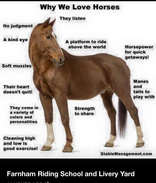 Horses are the best!