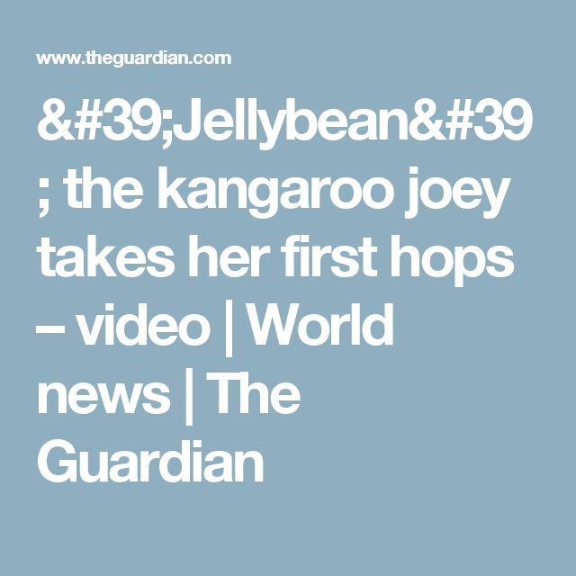'Jellybean' the kangaroo joey takes her first hops – video | World news | The Guardian