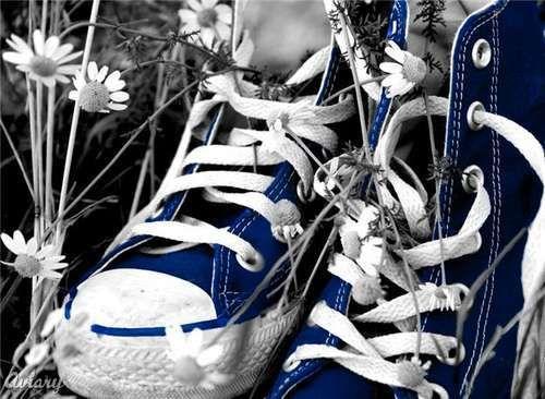 Color Splash photography (Color Splash Studio) / blue sneakers / field of daisies