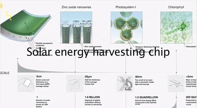 Las celdas solares podrían salir de las plantas