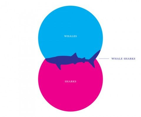 Best graph ever. @Brittany King it's how we feel during Shark Week ... I'm obsessed with this concept.