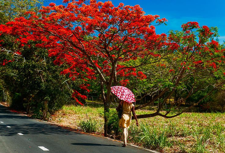 Walking Along The Road. Mauritius by Jenny Rainbow