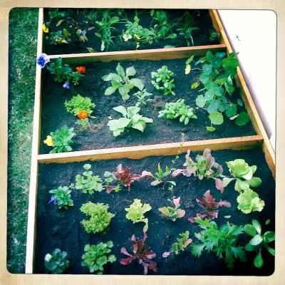getting started on a raised bed including companion planting
