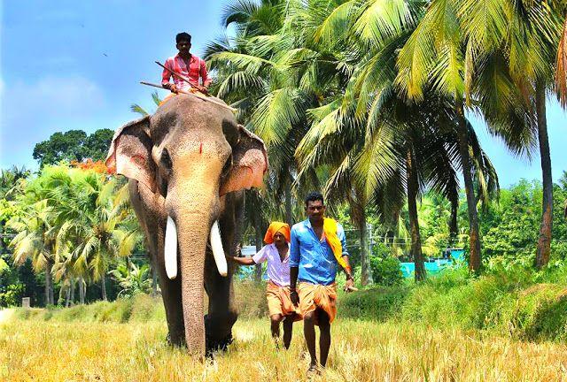 Thechikottukavu Ramachandran Hd Photos Famous Elephants