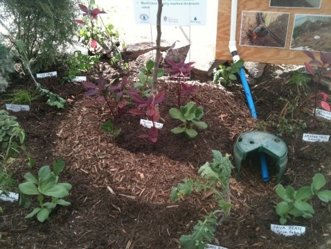 65 Best Images About Sustainable Gardening Ideas On